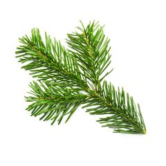fir branche from a christmas tree - Stock Photo or Stock Video of rcfotostock | RC-Photo-Stock