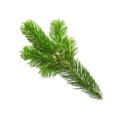 fir branche isolated on white- Stock Photo or Stock Video of rcfotostock | RC-Photo-Stock