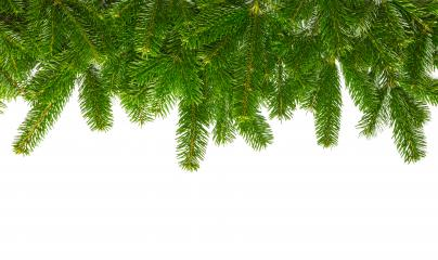 fir branches background- Stock Photo or Stock Video of rcfotostock | RC-Photo-Stock