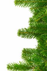 fir branches chistmas background- Stock Photo or Stock Video of rcfotostock | RC-Photo-Stock