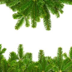 fir branches for christmas background- Stock Photo or Stock Video of rcfotostock | RC-Photo-Stock