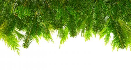 fir branches mix for christmas- Stock Photo or Stock Video of rcfotostock | RC-Photo-Stock