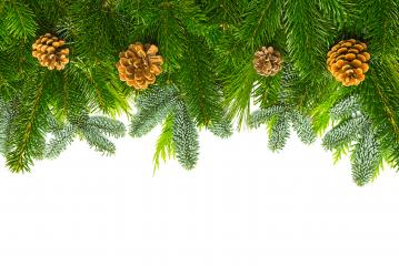 fir branches with pine cones- Stock Photo or Stock Video of rcfotostock | RC-Photo-Stock