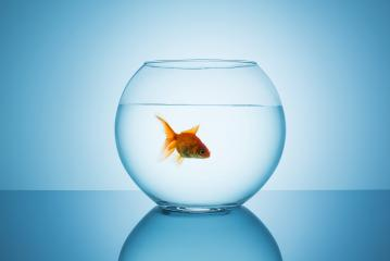 fish in a fishbowl : Stock Photo or Stock Video Download rcfotostock photos, images and assets rcfotostock | RC-Photo-Stock.: