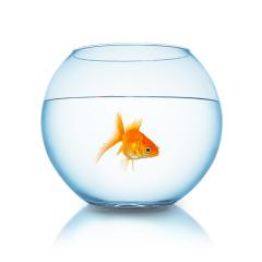 fishbowl with fish : Stock Photo or Stock Video Download rcfotostock photos, images and assets rcfotostock | RC-Photo-Stock.: