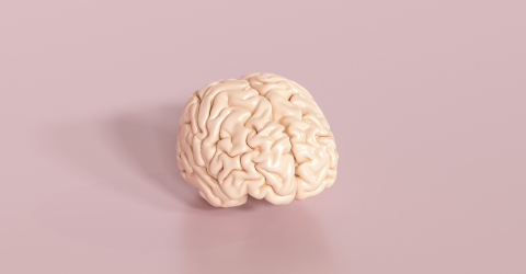 Floating brain as an artificial intelligence concept - Stock Photo or Stock Video of rcfotostock | RC-Photo-Stock