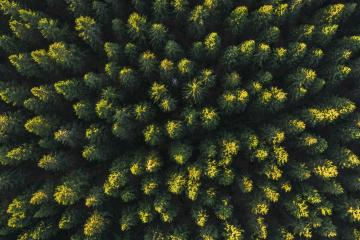 forest aerial drone view- Stock Photo or Stock Video of rcfotostock | RC-Photo-Stock