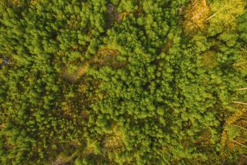 Forest background. Drone point of view.- Stock Photo or Stock Video of rcfotostock | RC-Photo-Stock