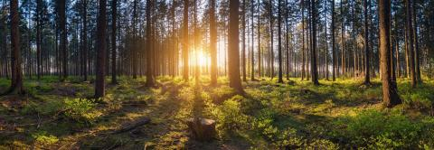 forest backlighted by golden sunlight before sunset panorama- Stock Photo or Stock Video of rcfotostock | RC-Photo-Stock