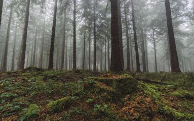 Forest in autumn morning mist- Stock Photo or Stock Video of rcfotostock | RC-Photo-Stock