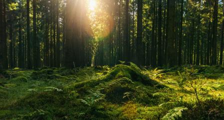 forest in autumn with bright sun shining through a Tree trunk- Stock Photo or Stock Video of rcfotostock | RC-Photo-Stock