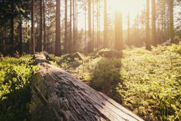 Forest in spring with beautiful bright sun light- Stock Photo or Stock Video of rcfotostock | RC-Photo-Stock