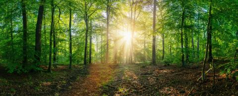 Forest panorama at sunrise - Stock Photo or Stock Video of rcfotostock | RC-Photo-Stock