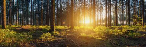 Forest panorama with sunsetlight- Stock Photo or Stock Video of rcfotostock | RC-Photo-Stock