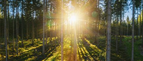 Forest panorama with sunsetlight - aerial drone shot : Stock Photo or Stock Video Download rcfotostock photos, images and assets rcfotostock | RC-Photo-Stock.: