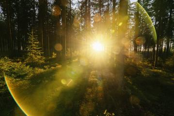 forest trees nature green wood sunlight view with fun flares- Stock Photo or Stock Video of rcfotostock | RC-Photo-Stock