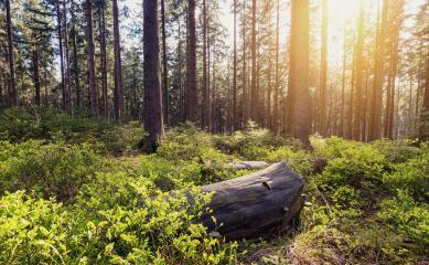 Forest view with bright sunlight- Stock Photo or Stock Video of rcfotostock | RC-Photo-Stock