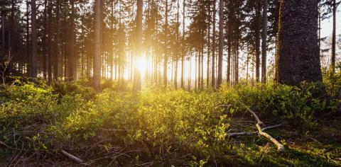 Forest with beautiful bright sun rays- Stock Photo or Stock Video of rcfotostock | RC-Photo-Stock