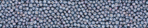Fresh blueberries background or backdrop with copyspace for your individual text. Vegan and vegetarian concept. Macro texture of blueberry berries. Summer healthy food. Banner size- Stock Photo or Stock Video of rcfotostock | RC-Photo-Stock
