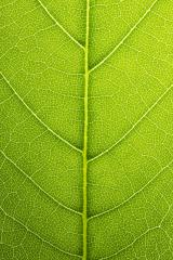Fresh green leaves shaping background- Stock Photo or Stock Video of rcfotostock | RC-Photo-Stock