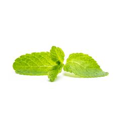 fresh mint leaf- Stock Photo or Stock Video of rcfotostock | RC-Photo-Stock