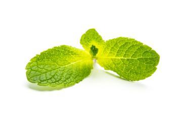 fresh mint leaf on white- Stock Photo or Stock Video of rcfotostock | RC-Photo-Stock