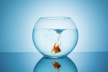 frightened goldfish in a fishbowl : Stock Photo or Stock Video Download rcfotostock photos, images and assets rcfotostock | RC-Photo-Stock.: