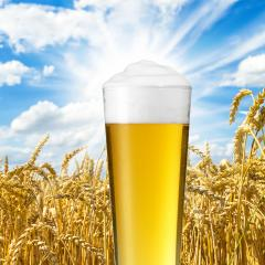 German beer- Stock Photo or Stock Video of rcfotostock | RC-Photo-Stock