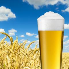 Glass of beer against wheat field- Stock Photo or Stock Video of rcfotostock | RC-Photo-Stock