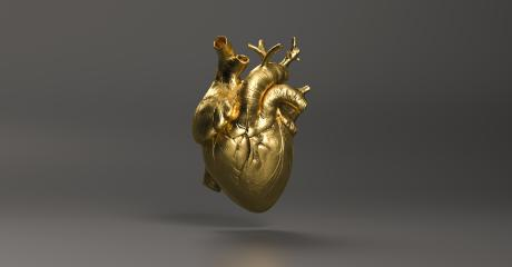 Gold Anatomical human Heart. Anatomy and medicine concept image. : Stock Photo or Stock Video Download rcfotostock photos, images and assets rcfotostock | RC-Photo-Stock.:
