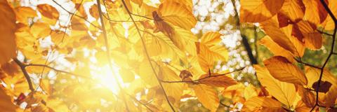 Golden autumn scene banner in a park, with colorful leaves, and explosive sunlight : Stock Photo or Stock Video Download rcfotostock photos, images and assets rcfotostock | RC-Photo-Stock.: