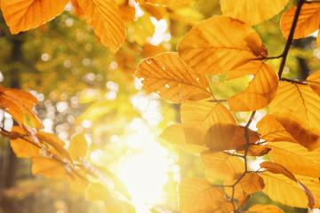 Golden autumn scene in the forest with orange leaves against the sun shining through the trees- Stock Photo or Stock Video of rcfotostock | RC-Photo-Stock