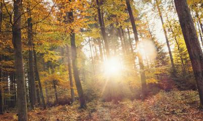 Golden autumn scene in the forest with sun shining exposiv through the trees- Stock Photo or Stock Video of rcfotostock | RC-Photo-Stock