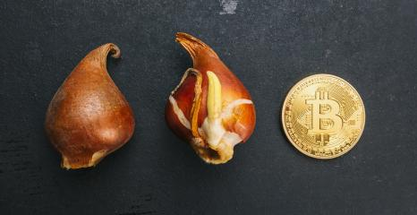 Golden Bitcoin Coin with Tulip bulbs -Tulip mania Financial crisis concept image- Stock Photo or Stock Video of rcfotostock | RC-Photo-Stock