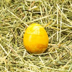 golden easter egg on hay- Stock Photo or Stock Video of rcfotostock | RC-Photo-Stock