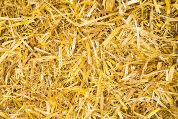 golden straw background- Stock Photo or Stock Video of rcfotostock   RC-Photo-Stock