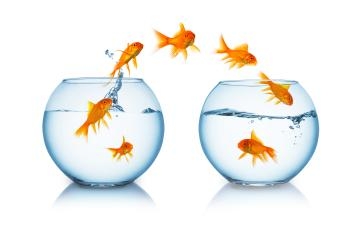 goldfish change- Stock Photo or Stock Video of rcfotostock | RC-Photo-Stock