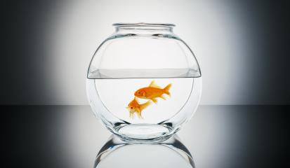 Goldfish couple in a fishbowl- Stock Photo or Stock Video of rcfotostock | RC-Photo-Stock