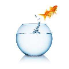 Goldfish couple jumps out of a fishbowl- Stock Photo or Stock Video of rcfotostock | RC-Photo-Stock