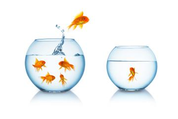 goldfish escapes in a fishbowl- Stock Photo or Stock Video of rcfotostock | RC-Photo-Stock