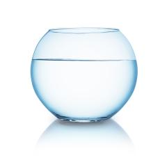goldfish fishbowl : Stock Photo or Stock Video Download rcfotostock photos, images and assets rcfotostock | RC-Photo-Stock.: