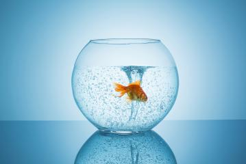 Goldfish flees for a tornado in a fishbowl : Stock Photo or Stock Video Download rcfotostock photos, images and assets rcfotostock | RC-Photo-Stock.: