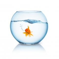 goldfish in a fishbowl  : Stock Photo or Stock Video Download rcfotostock photos, images and assets rcfotostock | RC-Photo-Stock.: