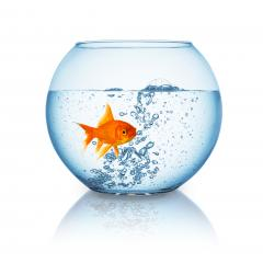 goldfish in a fishbowl with hot water- Stock Photo or Stock Video of rcfotostock | RC-Photo-Stock
