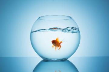 goldfish in a fishbowl with wavy water : Stock Photo or Stock Video Download rcfotostock photos, images and assets rcfotostock | RC-Photo-Stock.: