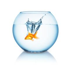 goldfish jumps in a fishbowl- Stock Photo or Stock Video of rcfotostock | RC-Photo-Stock