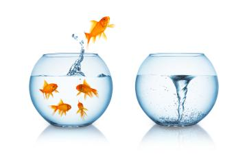 Goldfish jumps in to a swirl- Stock Photo or Stock Video of rcfotostock | RC-Photo-Stock