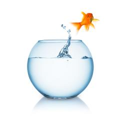 goldfish jumps out of a fishbowl : Stock Photo or Stock Video Download rcfotostock photos, images and assets rcfotostock | RC-Photo-Stock.: