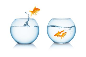 goldfish jumps to his friends : Stock Photo or Stock Video Download rcfotostock photos, images and assets rcfotostock | RC-Photo-Stock.: