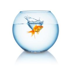 goldfish splashes in a fishbowl- Stock Photo or Stock Video of rcfotostock | RC-Photo-Stock